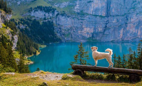 3x vakantie met huisdieren in Italië